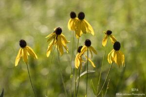 flower flowers yellow