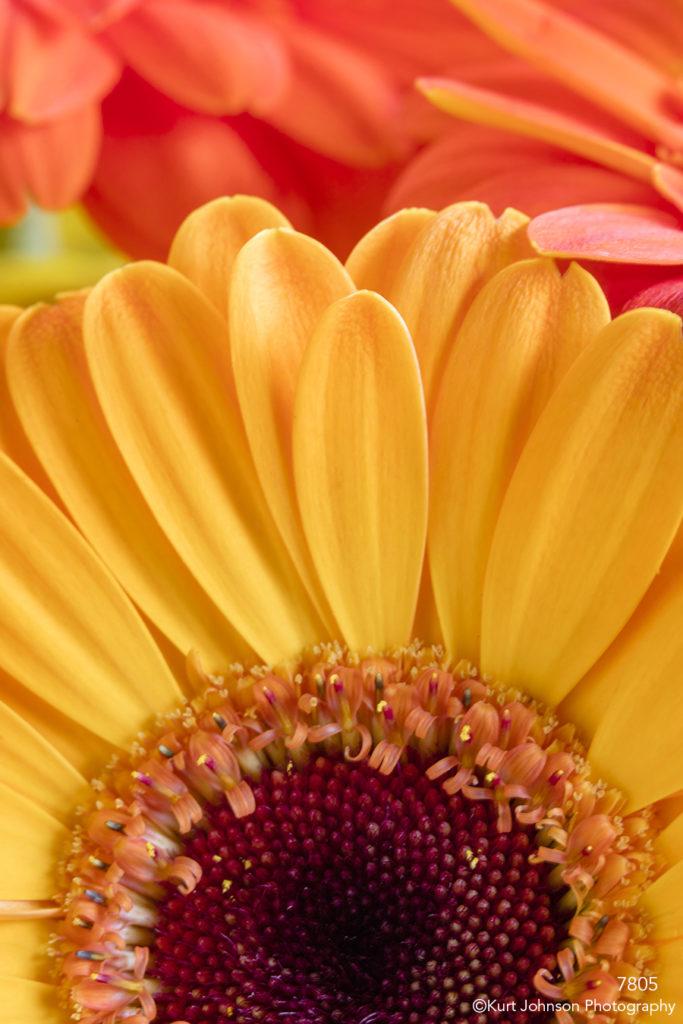flower flowers yellow orange petals