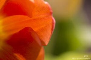 flower petals orange texture