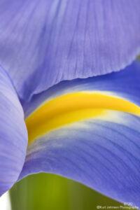 flower purple iris texture petals