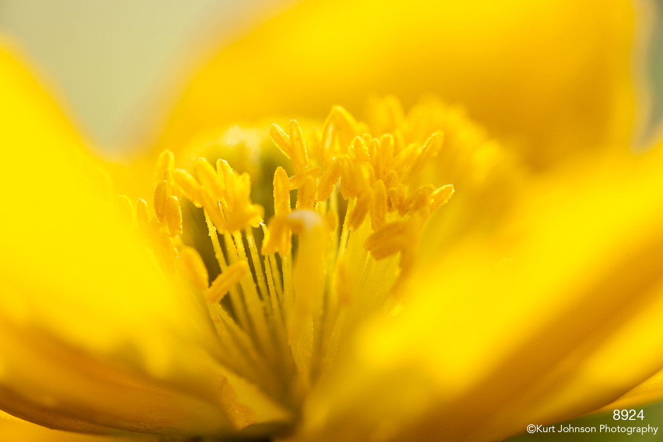 flower yellow texture