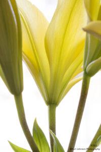 flower flowers yellow petals