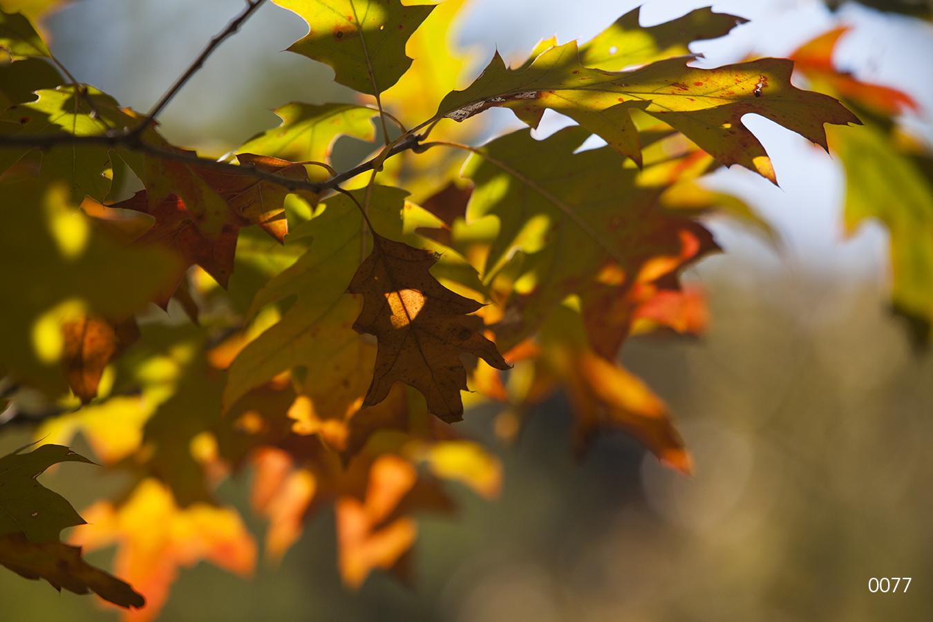 tree trees leaves green yellow orange fall autumn shadows