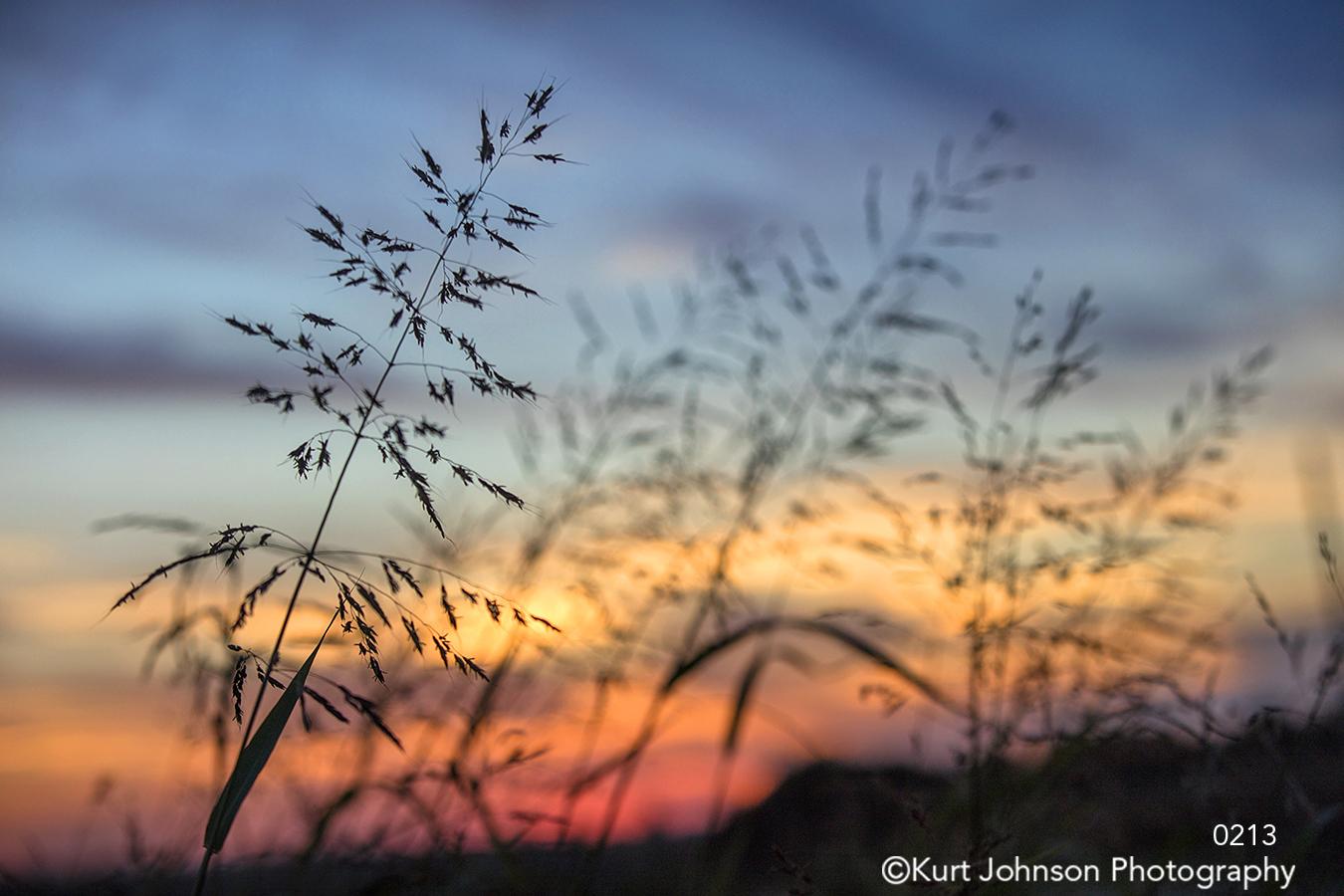 tall grass grasses sunset purple pink sky wheat field midwest