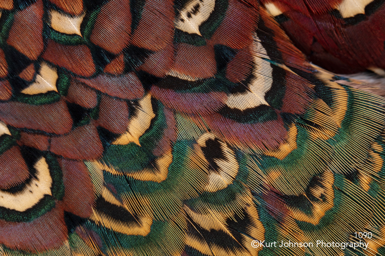 texture textures feathers pattern red brown yellow green