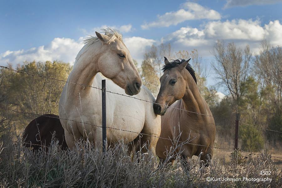 horse horses animals farm pasture
