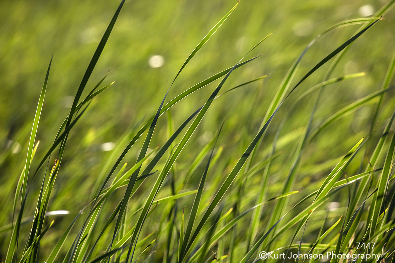 grass grasses green wet rain earth earth tones detail lines