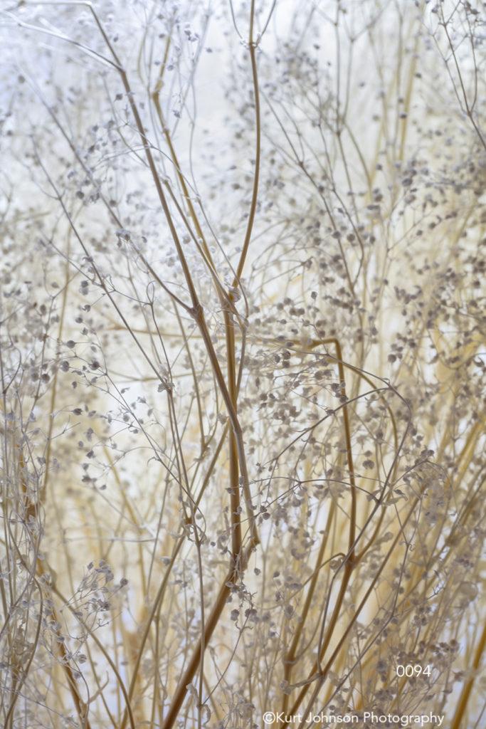 soft studio texture white beige tan baby's breath
