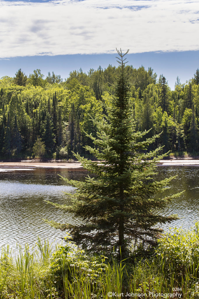 pine tree green river stream trees waterscape waves