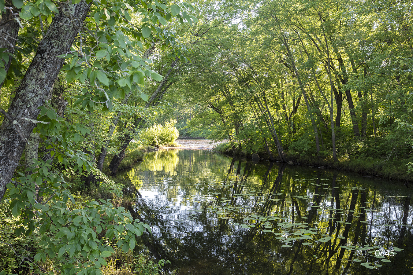 trees forest green river stream shadows reflection mirror water waterscape