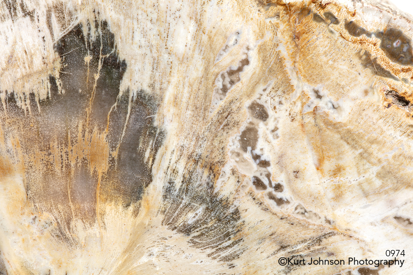 beige tan sand pattern texture shell rock stone