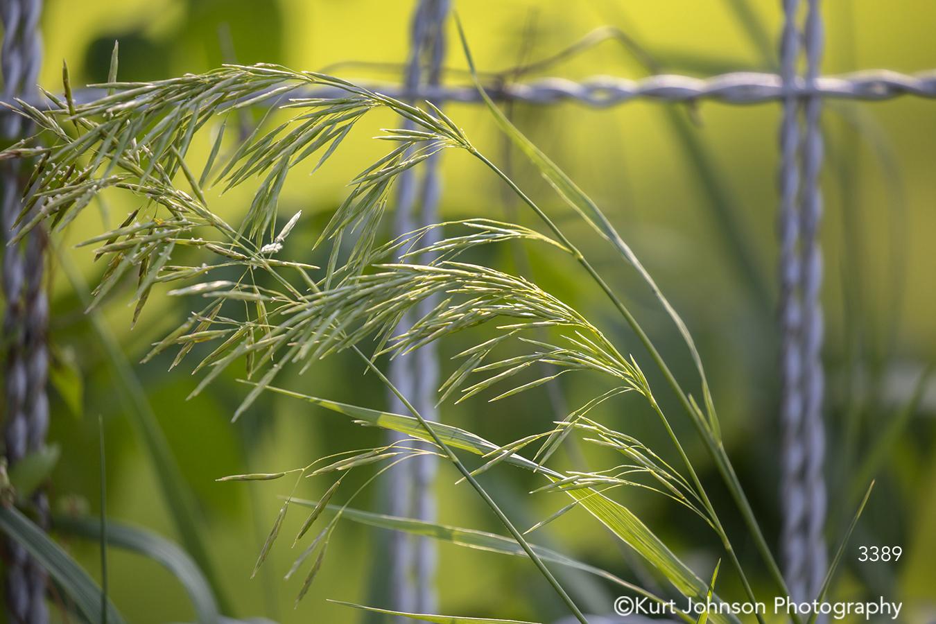 green grass field fence farm midwest