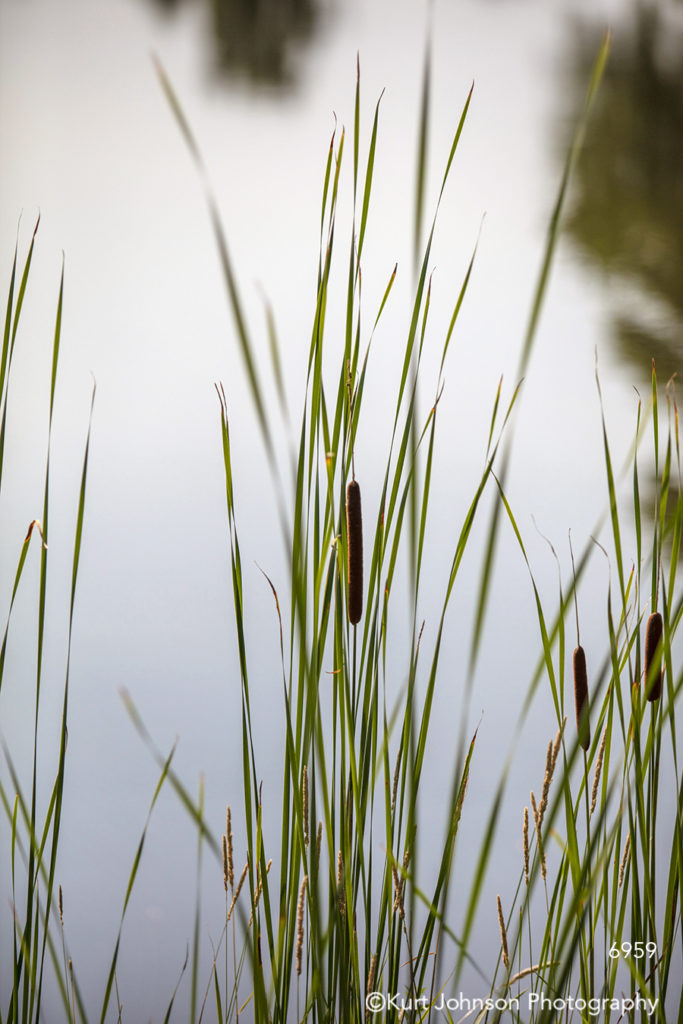 green grass reed grasses water waterscape