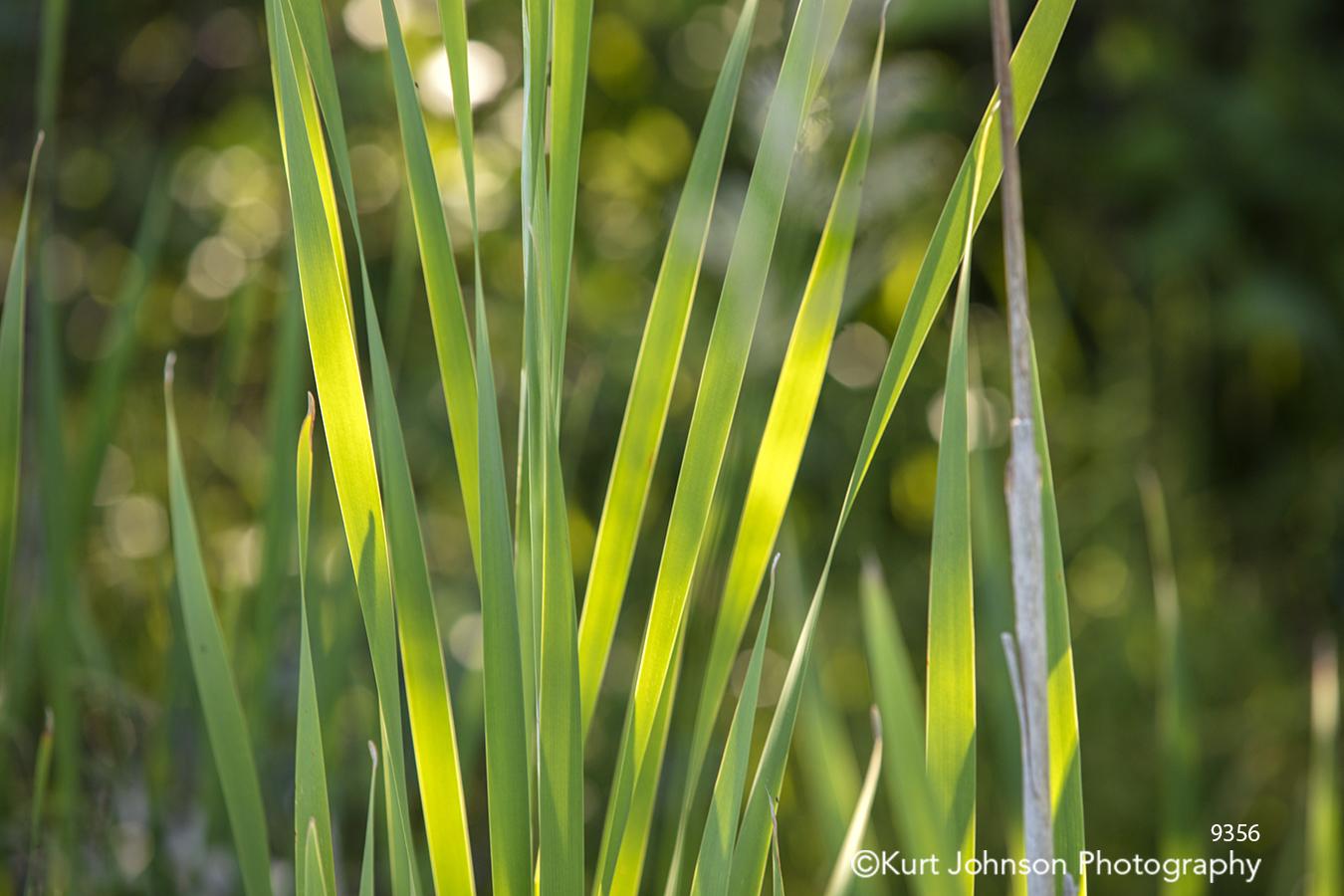 green grass grasses yellow field detail close up
