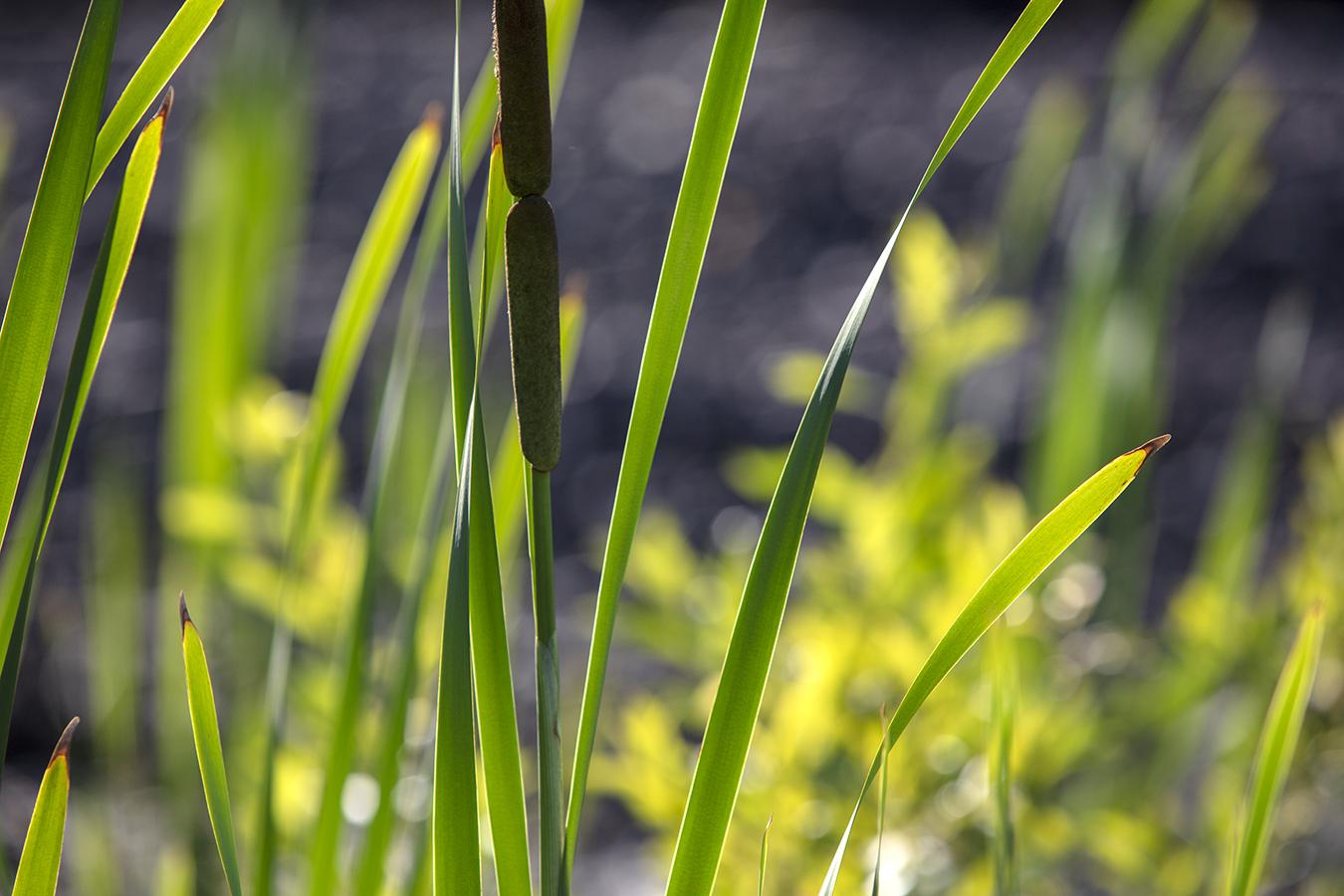 green grass grasses field lines
