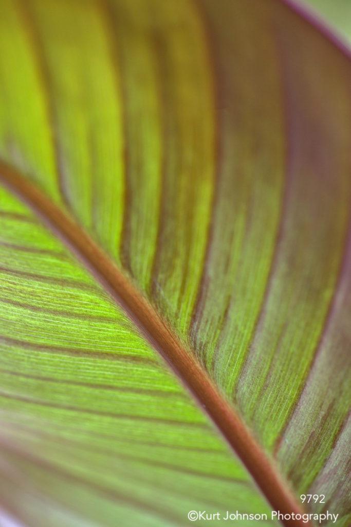 leaf leaves green orange red detail close up lines pattern stem