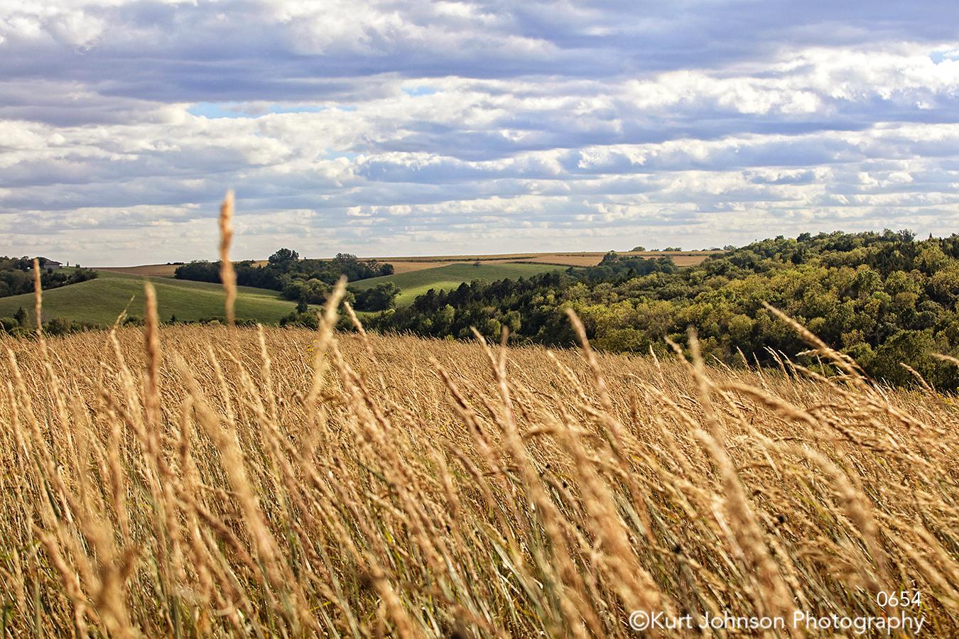 gold brown wheat grass green grasses field farm prairie midwest landscape blue sky