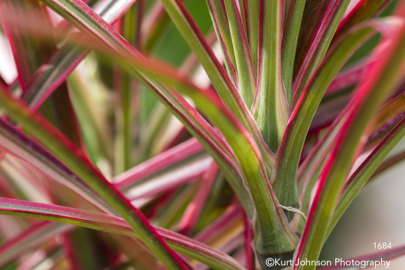 red green lines pattern grass grasses leaves
