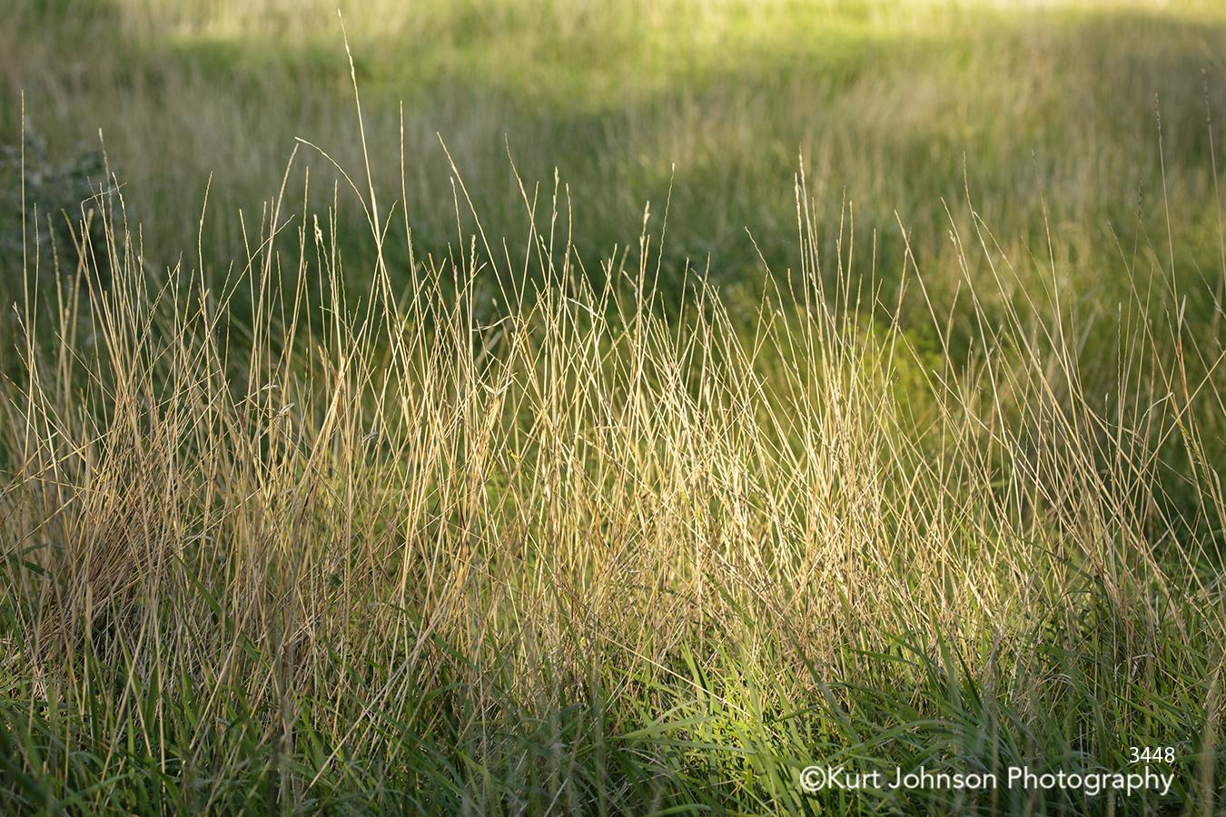 green tall grass grasses field lines pattern
