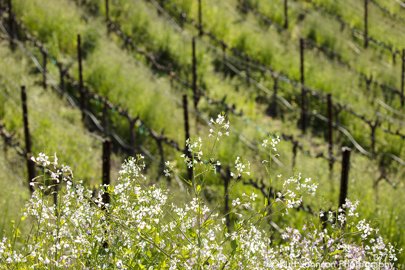 green grass grasses lines vineyard pattern