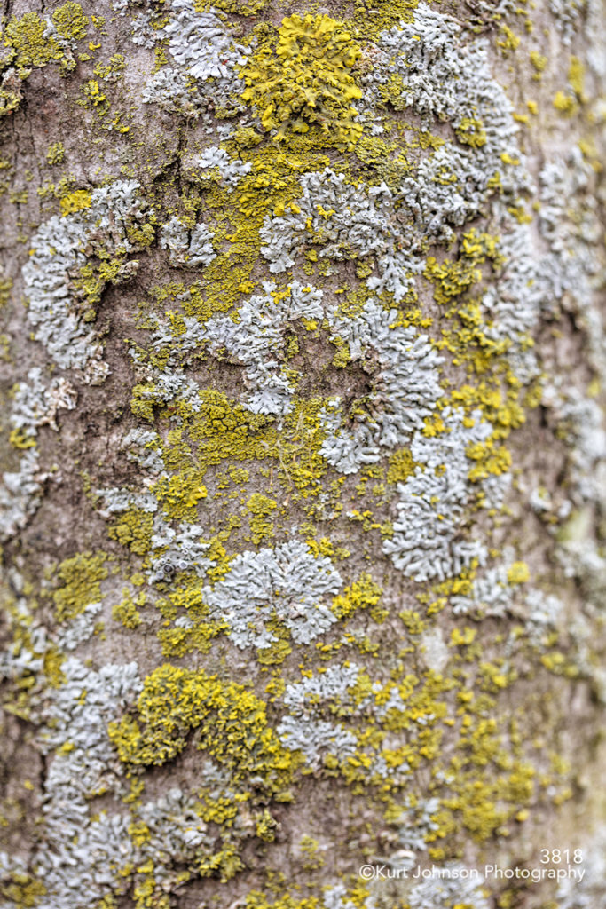 yellow green moss tree bark pattern texture lines