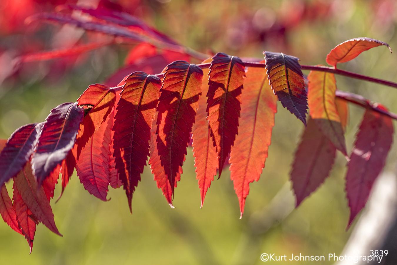 red orange leaves tree detail pattern