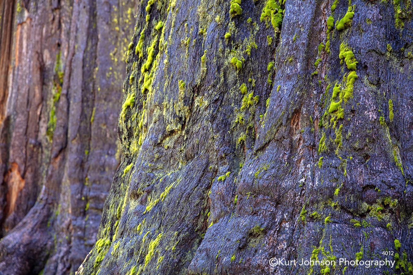 tree bark green moss brown purple close up detail pattern texture
