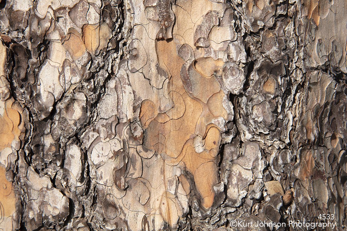 brown orange tree bark texture pattern