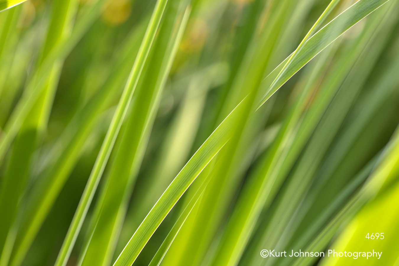 green grass grasses lines pattern detail close up