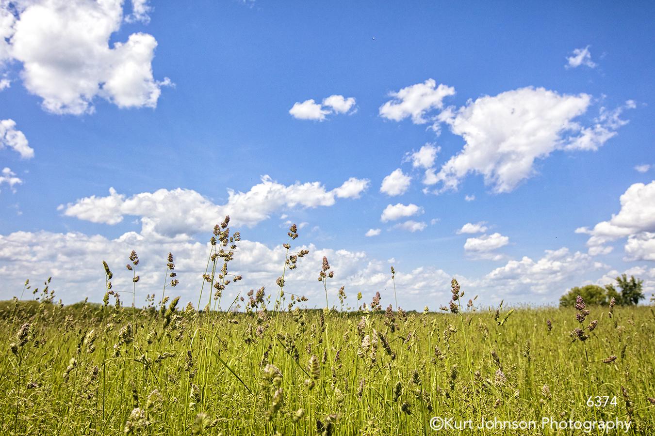 green grass grasses wheat field blue sky clouds landscape