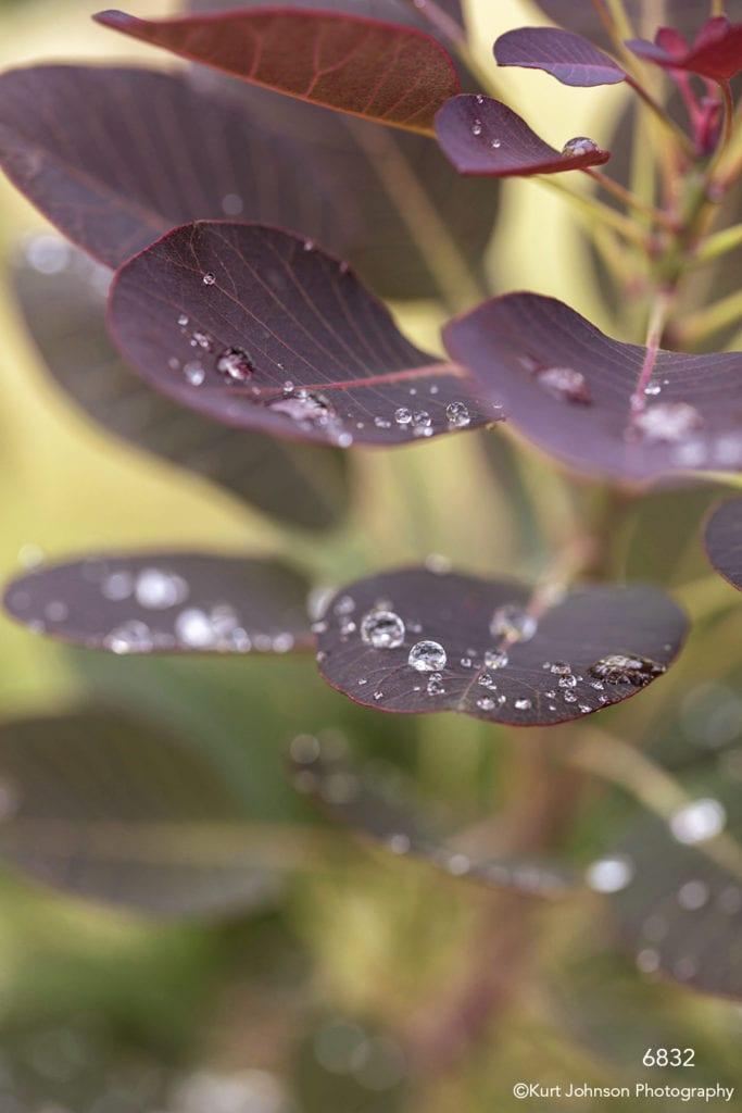 leaves detail purple water drop close up