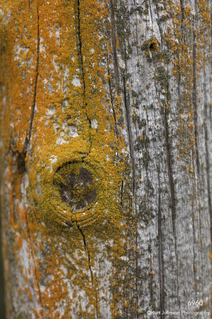 yellow orange moss tree bark detail pattern texture lines