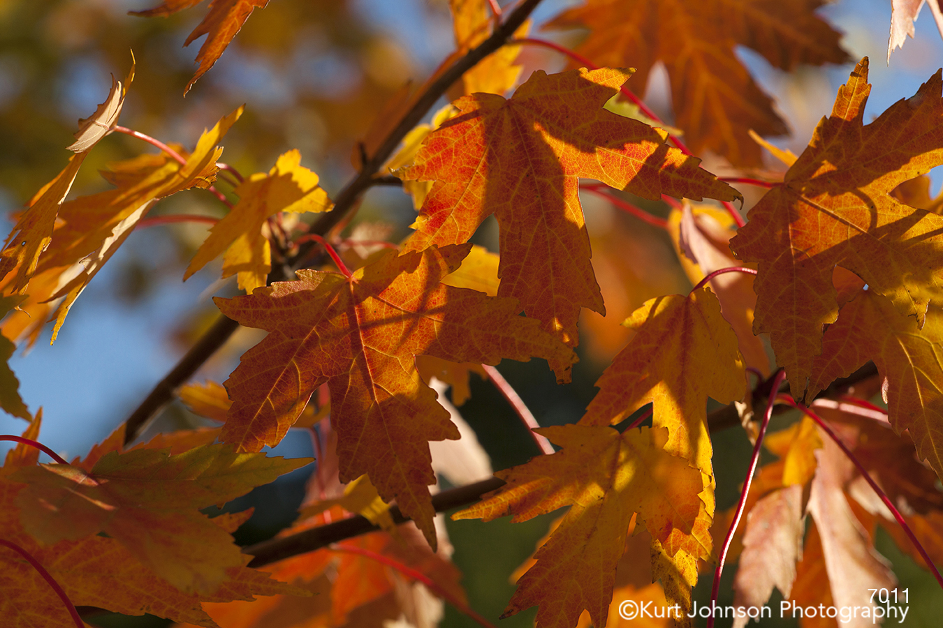 red yellow orange leaves fall autumn shadows