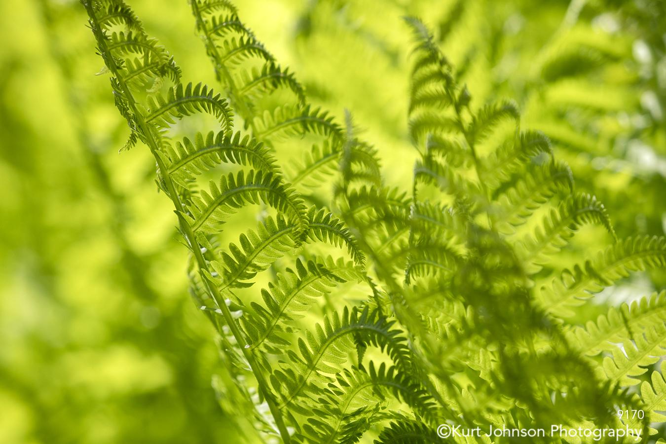 green yellow fern leaves pattern texture