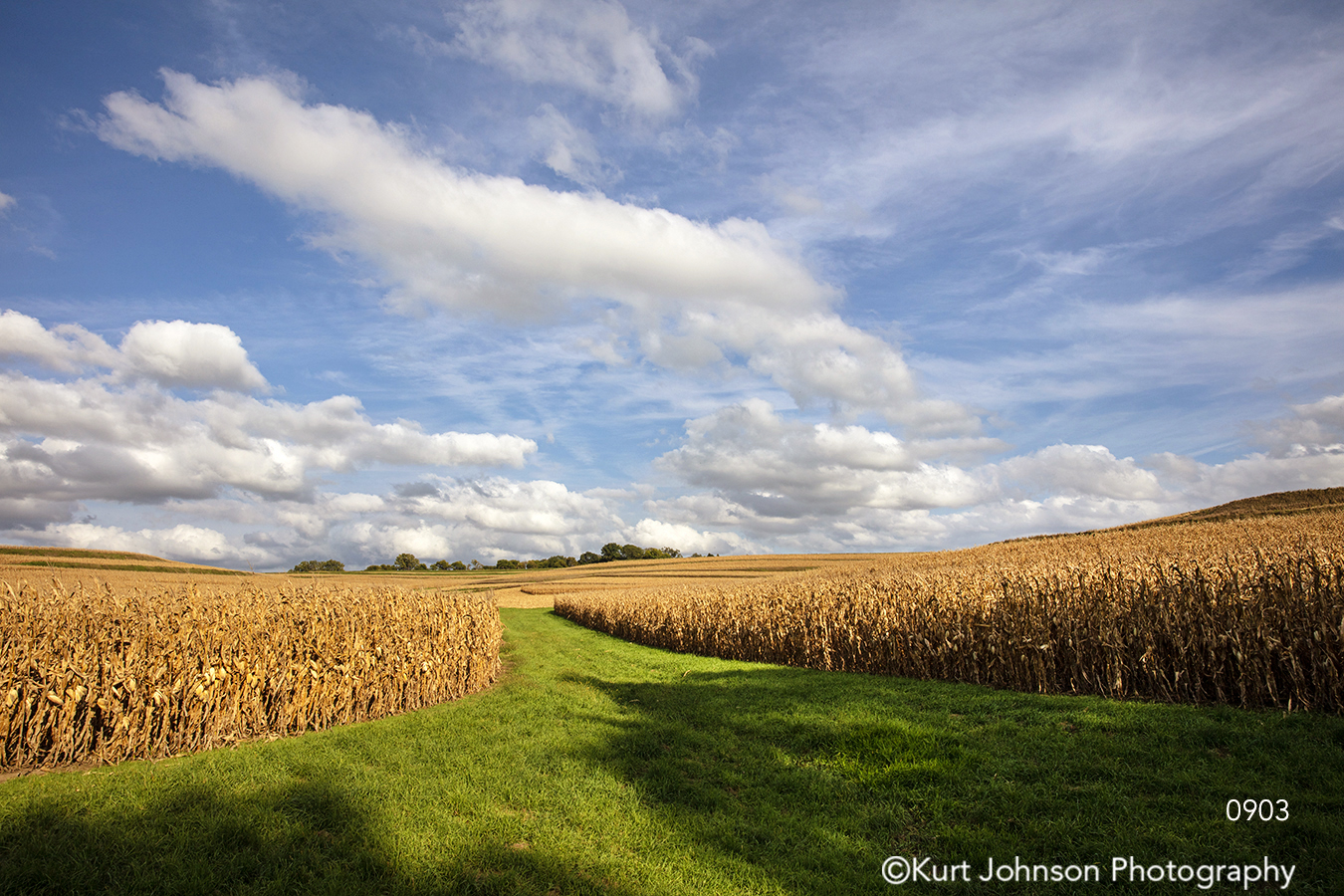 midwest blue sky green grass field corn field country farm landscape