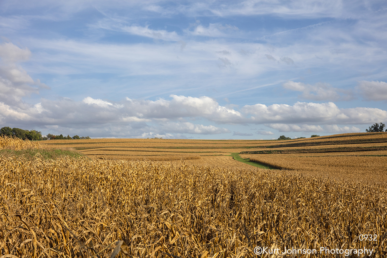 midwest blue sky corn field yellow gold farm country landscape