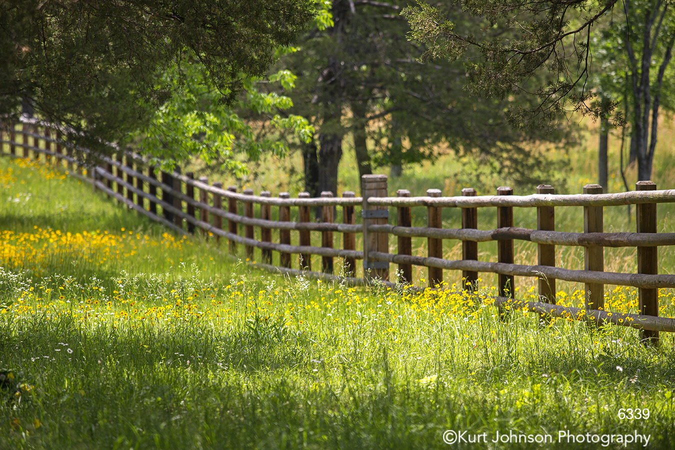 green grass midwest yellow flowers field fence country trees