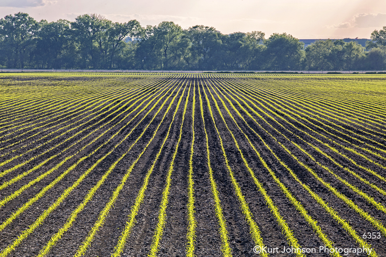midwest country farm green fields lines pattern trees