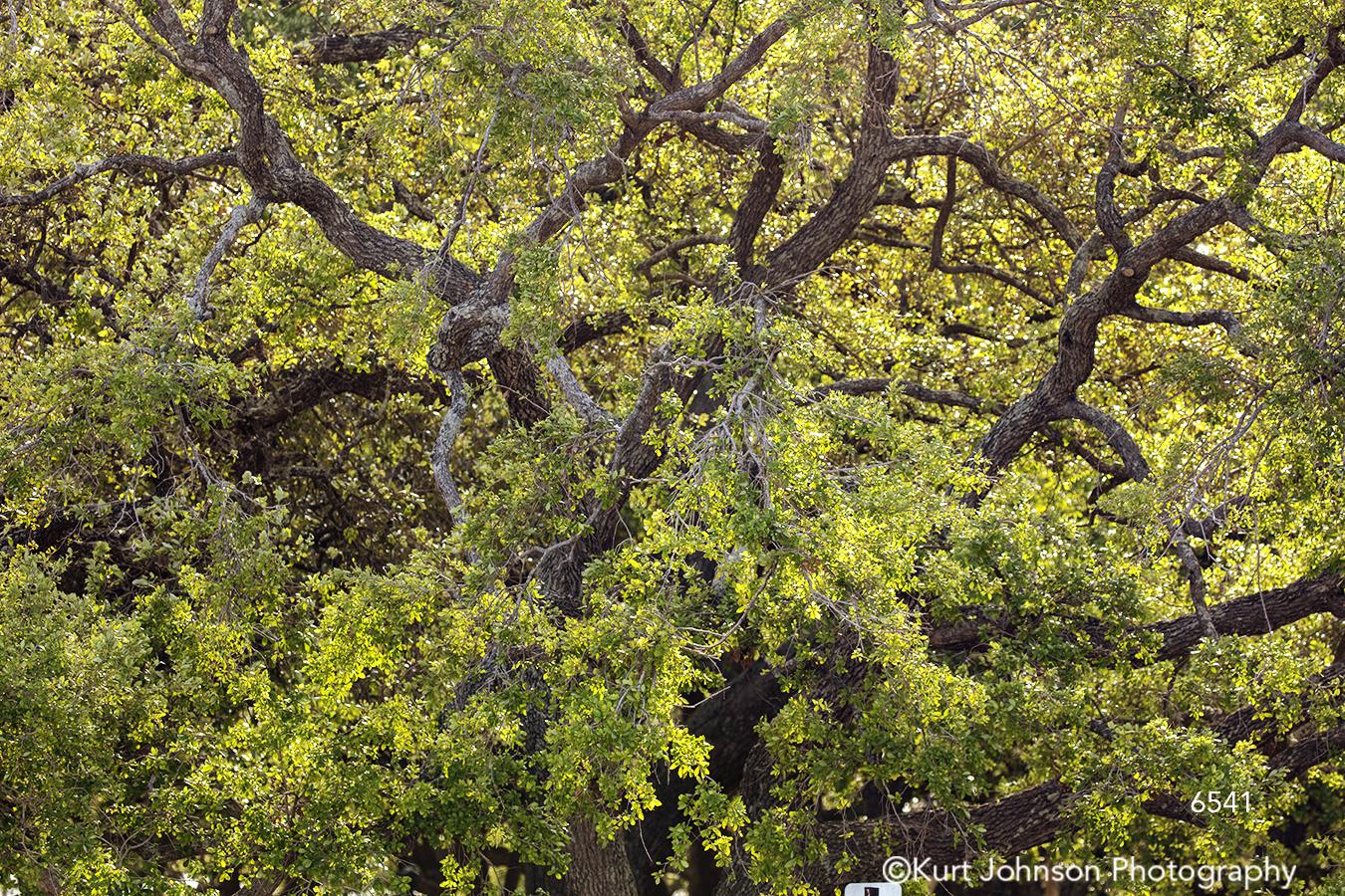 southeast Charleston South Carolina green tree trees branches