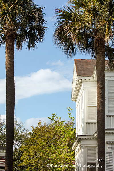 southeast Charleston South Carolina green palm trees blue sky architecture building city