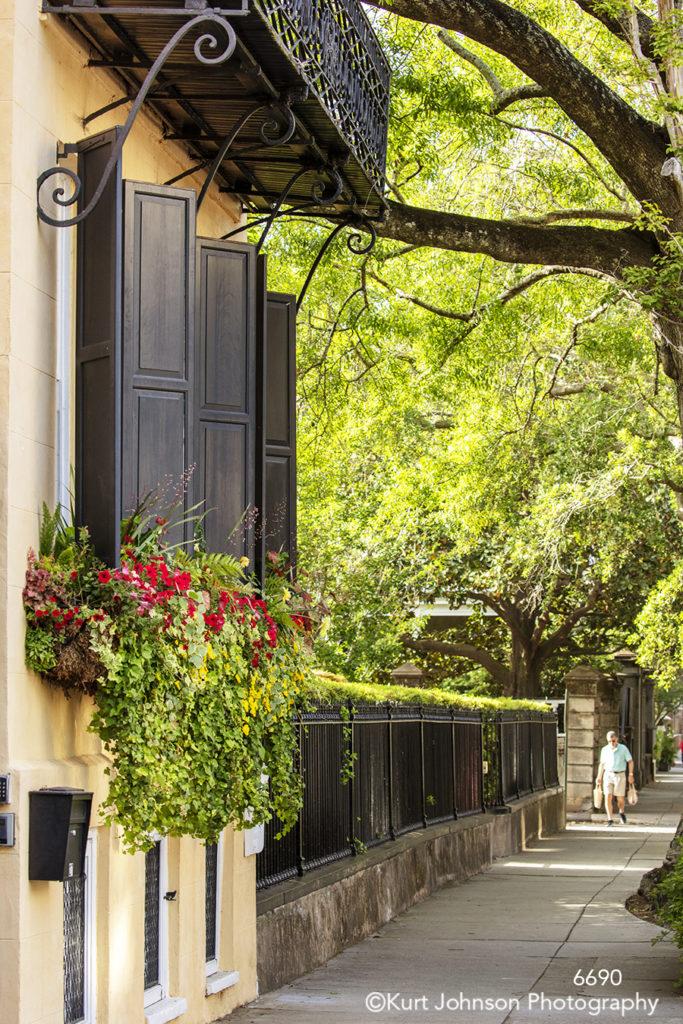 southeast Charleston South Carolina green trees black shutters windows red flowers city street path