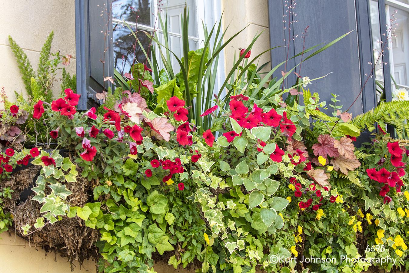 southeast Charleston South Carolina green red flowers window windowsill city