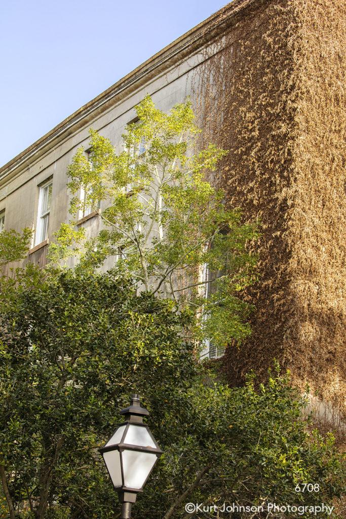 southeast Charleston South Carolina green trees windows city building brown architecture city blue sky