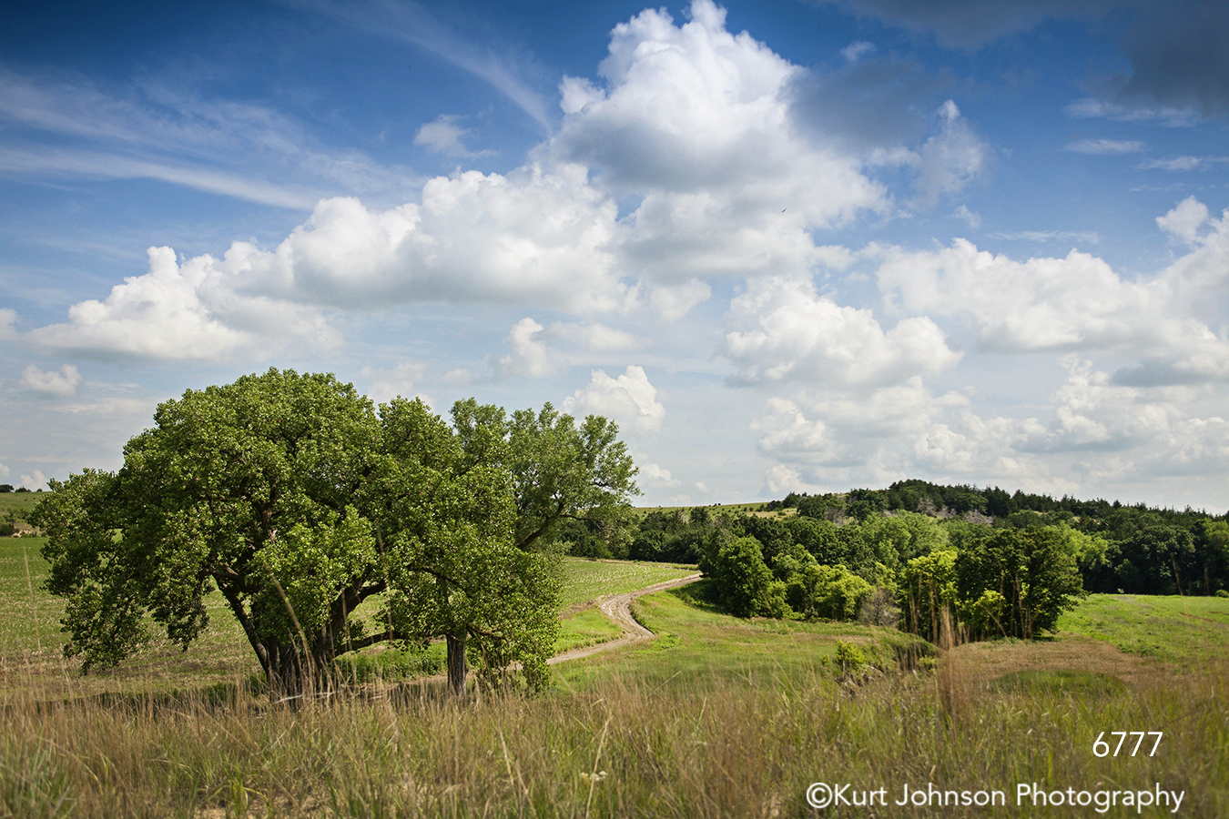 midwest landscape country trees path green grass dirt road blue sky clouds