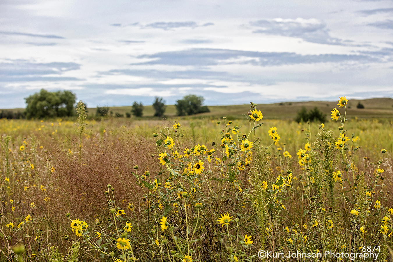 midwest flowers wildflowers country field farm trees tall grass
