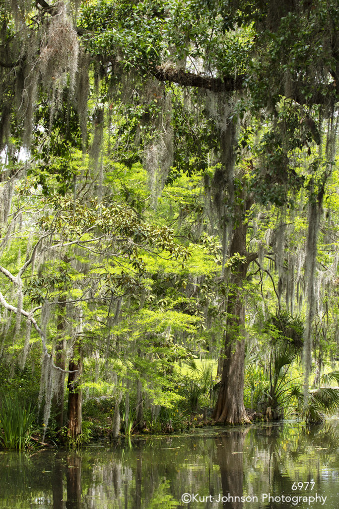 southeast Charleston South Carolina green trees branches water waterscape