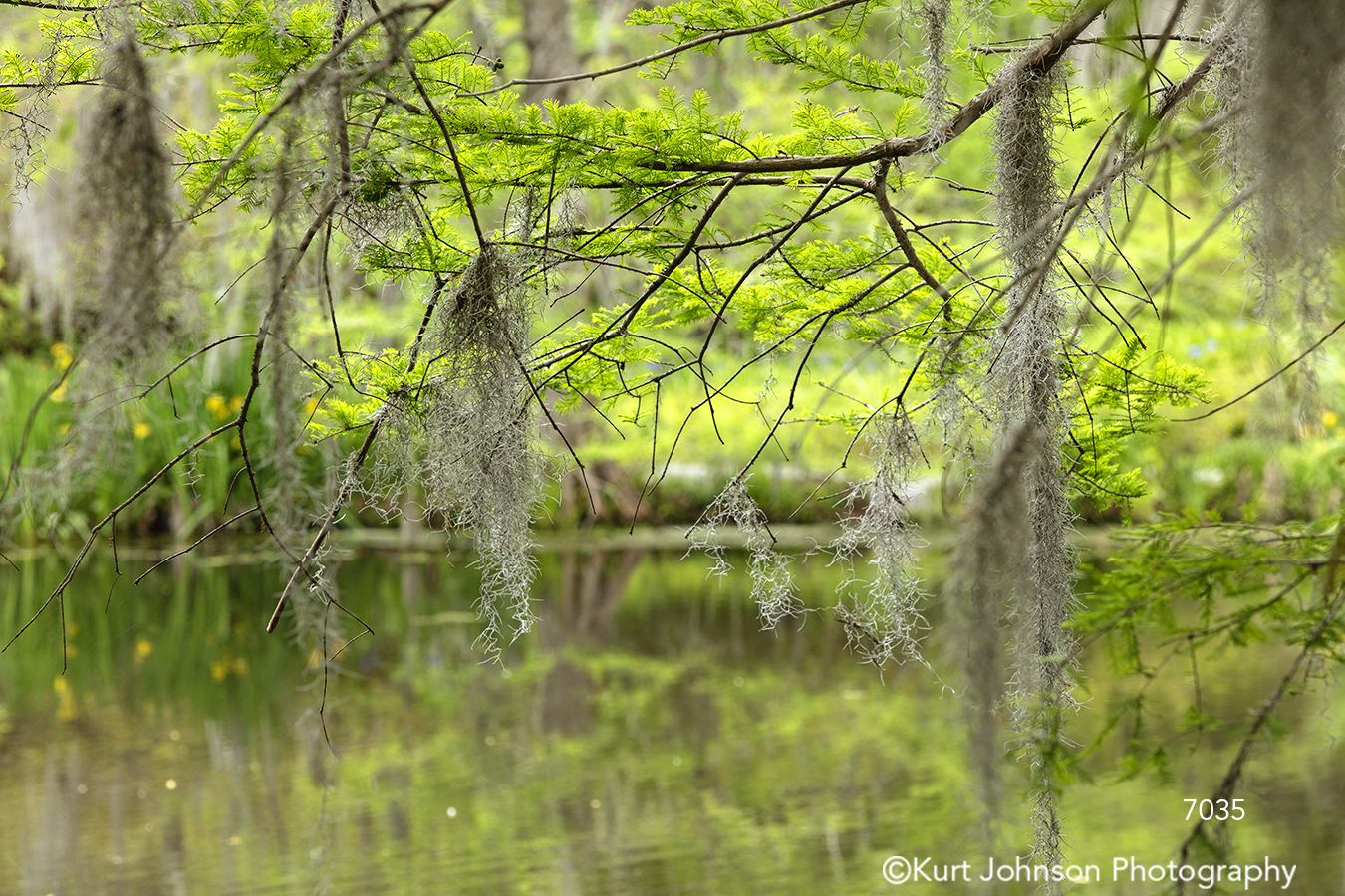 southeast Charleston South Carolina green moss trees branches water waterscape waterscapes