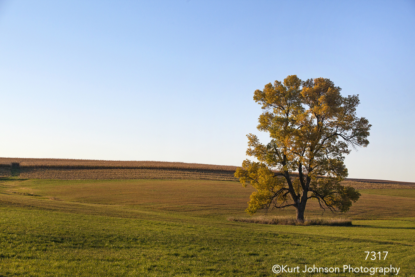 midwest tree field country landscape blue sky