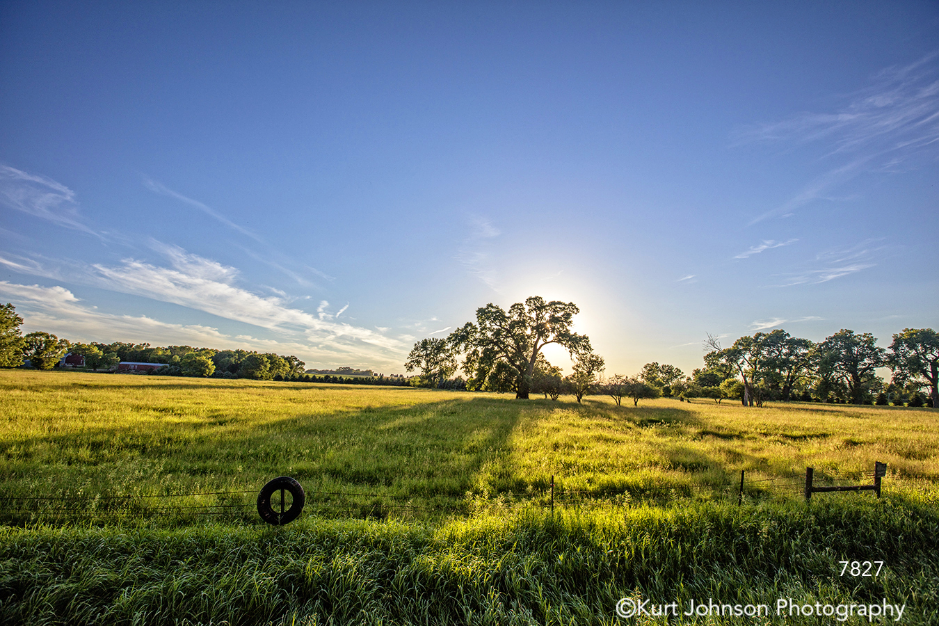 midwest tree sun flare blue sky tire farm green grass country field