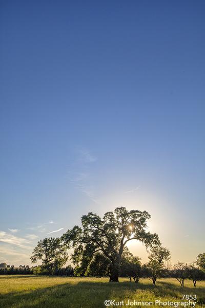 midwest blue sky tree field country landscape sun flare